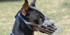 MUP TK: Kazne za izvođenje pasa bez povoca i brnjice i do 1000 KM
