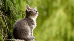 Mačke su lijek za dušu i tijelo: Prenose ljubav, umiruju i liječe predenjem!