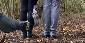 (VIDEO) Sova proletjela između ljudskih nogu da dođe do lovine