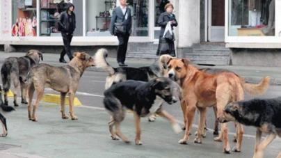 Njemačka želi udomiti i pse lutalice iz BiH