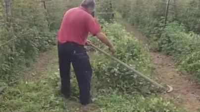 Propast uzgoja malina u BiH: Tako skupe na pijaci, a tako jeftin otkup… Kilogram prve klase samo 1 KM!