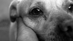 Nasilje nad životinjama u BiH sve šokantnije