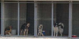 Iz Bosne i Hercegovine i psi odlaze u Njemačku