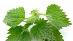 3 bolesti koje liječi kopriva: Evo kako da koristite biljku koja donosi brojne dobrobiti za zdravlje
