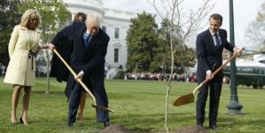 Osušilo se drvo prijateljstva koje su posadili Trump i Macron