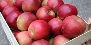 Jabuka Idared povučena s tržišta zbog pesticida