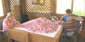 Porodica Jukan i njihove đulbšećer ruže: Litar ružinog ulja košta od deset do 15 hiljada eura