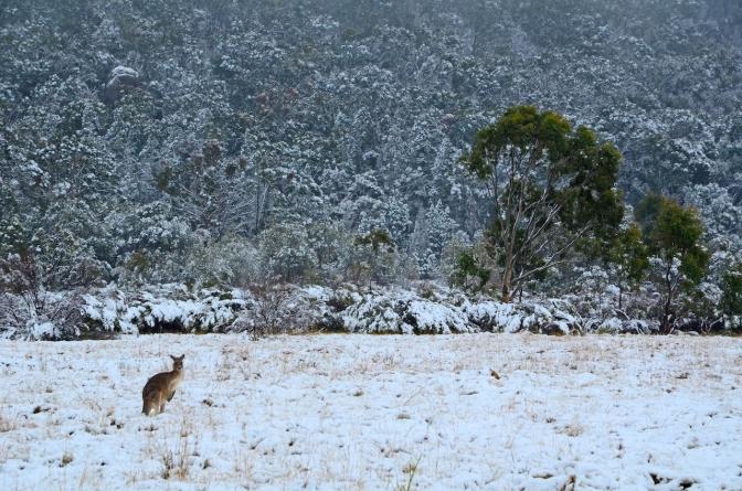 Snijeg pada, vjetrovi udaraju, ljudi uz obalu upozoreni da ne izlaze iz kuća, ne pamte ovakve prizore