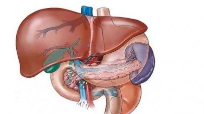 Pomagači u čišćenju jetre