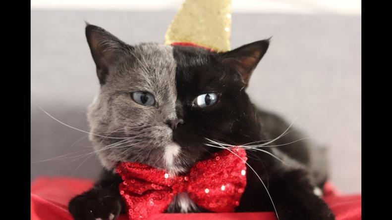 Mačka potpuno neobičnog izgleda postala nova zvijezda Instagrama