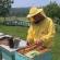 Loša godina za pčelare u TK, nadaju se izmjeni poticajne politike
