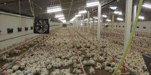 Nakon Srebrenika i Živinica: Bingo gradi farmu za uzgoj pilića u Kalesiji