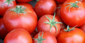 Zašto paradajz ne ide u frižider