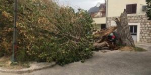 Jako nevrijeme zahvatilo Dalmaciju: Bura lomila grane i čupala iz korijena čitava stabla