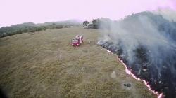 Iza požara u Amazonu krije se međunarodna glad za govedinom i sojom