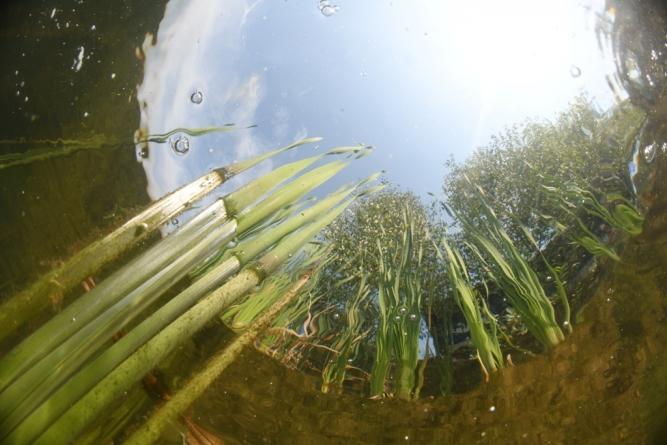 Održan Međunarodni kup u podvodnoj fotografiji /FOTO/