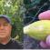 Nesebičan gest: Mirsad iz Mostara pozvao sve ljubitelje smokava da ga posjete i uberu sebi plodova
