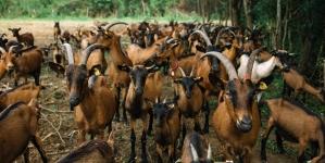 Farma Milo selo iz Lukavca nagrađena zlatnom medaljom za najkvalitetniji kozji sir