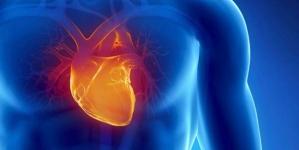 Koliko je srcu dnevno potrebno odmora da bi bilo zdravo