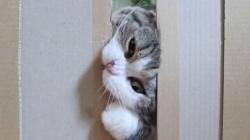Testirao kroz koliko uzak prolaz se mogu provući mačke