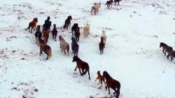 Nesvakidašnja ljepota BiH – Livanjski divlji konji snimljeni u 4K rezoluciji