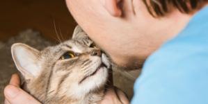 Mačke osim što vas čine sretnima mogu biti dobre i za vaše zdravlje