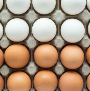 Jaje kao hrana i lijek: Jača imunitet, čuva srce, kožu, mozak