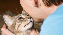 I mačke se emotivno vežu za ljude, možda i više nego psi