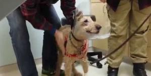 Slijepom psu veterinari vratili vid, njegova reakcija je posebna