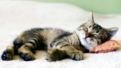 Čitajte govor tijela: Šta vam položajem spavanja mačke žele poručiti