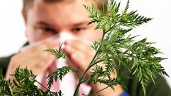 Ove biljke najviše izazivaju alergijske tegobe