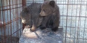Medvjedići iz Kreševa novi dom imat će u Tuzli