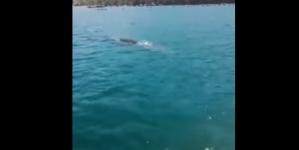 Kitovi kod Pelješkog mosta iznenadili i ribare