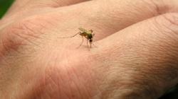 Tri jednostavna trika koja će vas zaštititi od komaraca