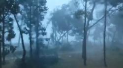 Olujno nevrijeme u Umagu čupalo stabla, u Dugoj Resi odletio krov vijećnice