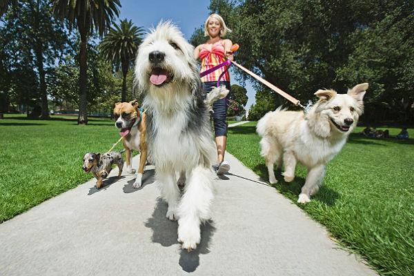 Nova pravila u Njemačkoj: Psi se moraju šetati najmanje dva puta dnevno