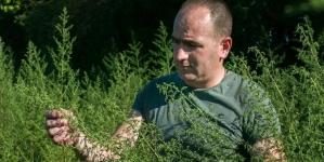 Njemački naučnici smatraju kako u Hercegovini raste lijek protiv korone
