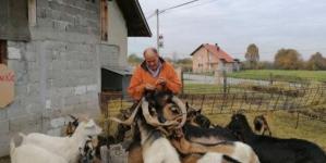 Vratio se iz Amerike da bi se bavio stočarstvom u BiH