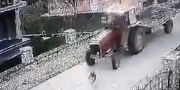 Pas koji je pregažen u Gračanici je živ, protiv počinitelja će biti podnesena prijava
