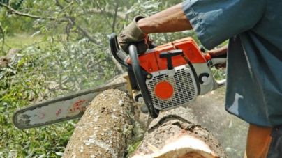 Dok šume u FBiH čekaju zakon, na sceni gola sječa