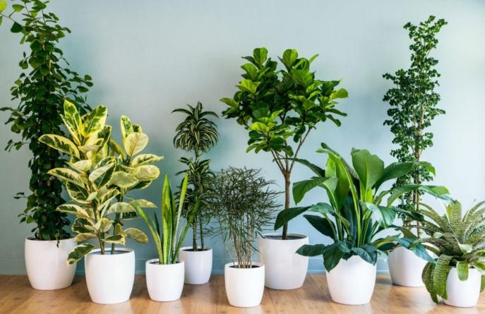 Profesionalci savjetuju: Pet savjeta uz koje će cvijeće u vazi duže trajati