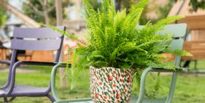 Kućna paprat – Lako se održava, lijepa na oko, ali i jako korisna biljka za dom