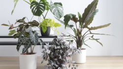 Pet rješenja za spas biljaka – ako mislite da su klonule
